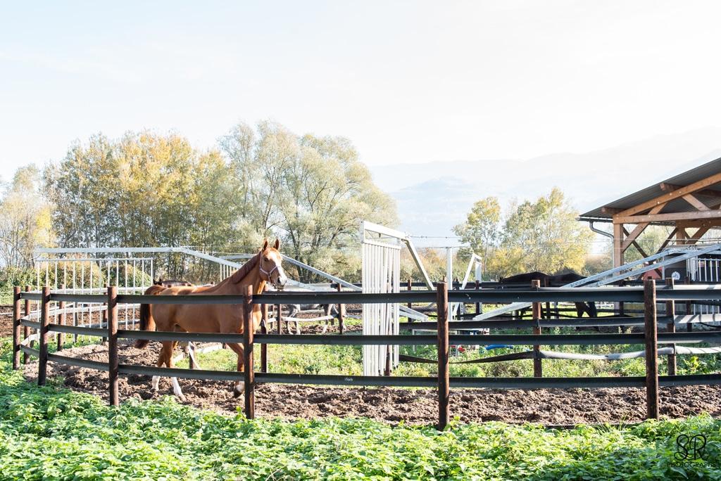 Un marcheur capacité 6 chevaux